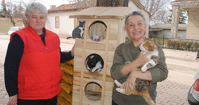 Konya'da kedilere toplu konut