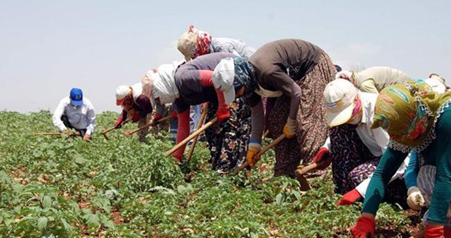 Mevsimlik tarım işçilerine en yüksek ödeme Konya ve Ordu'da