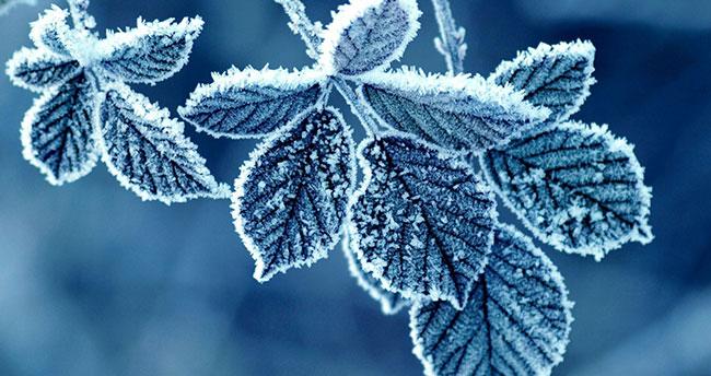 Konya ve çevresine zirai don uyarısı!