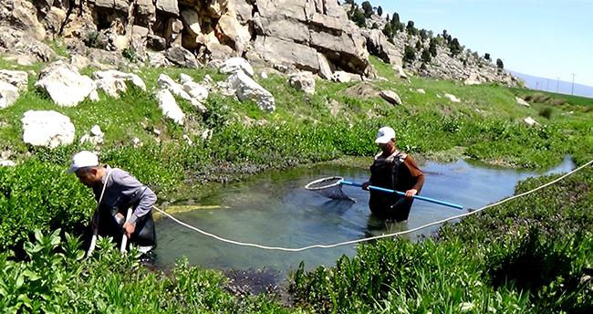 """Seydişehir'de """"yağ balığı""""nı araştırma çalışmaları devam ediyor"""