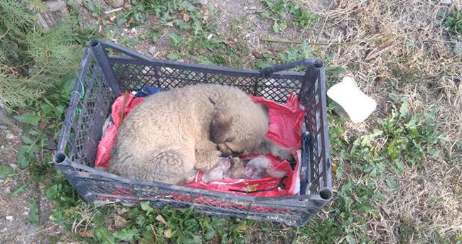 Arabanın çarpıp kaçtığı yavru köpeğe memurlar sahip çıktı