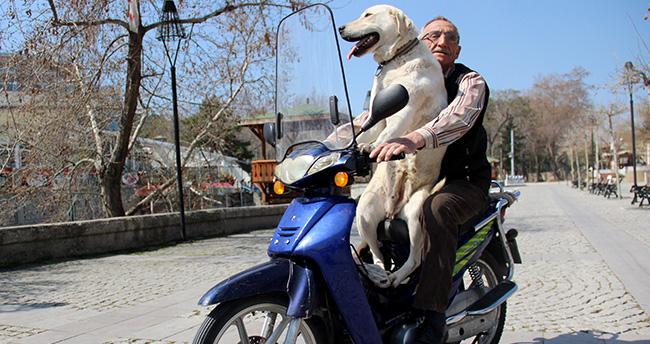 Konya'da Bulut köpeğin motosiklet tutkusu görenleri şaşırtıyor
