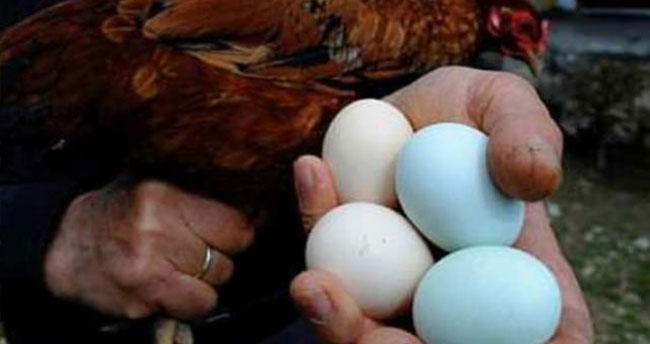 Türkiye mavi yumurtanın peşine düştü!