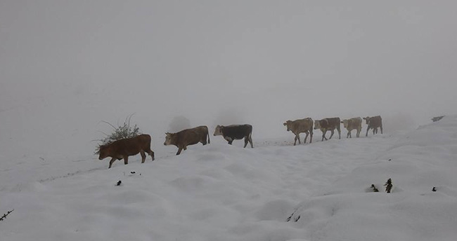 Konya Aladağ'da mayısta kar sürprizi