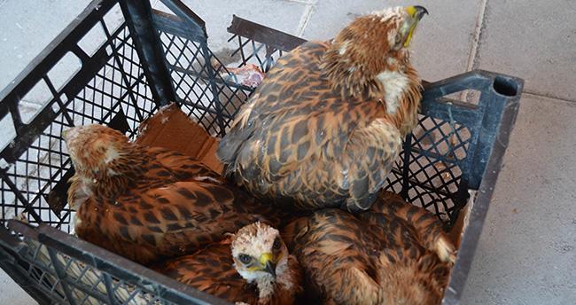 Konya'da çobanın bulduğu yavru doğanlar koruma altına alındı