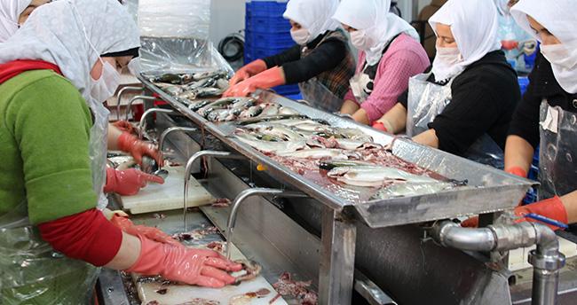 Konya'dan 15 ülkeye deniz ürünleri ihraç ediyor