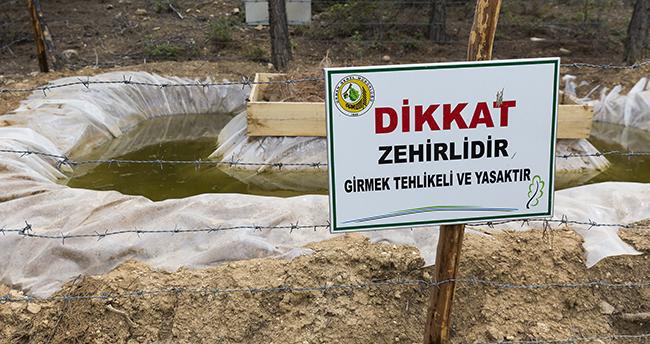 Bu havuzlar, ormanları zararlılardan koruyor