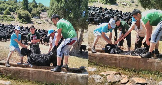 Beyşehir'de keçi sürülerinin banyo keyfi