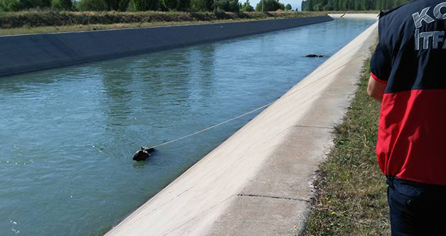 Konya'da sulama kanalına düşen hayvanlar kurtarıldı