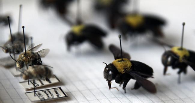 Emekli profesörün 25 bin böceklik koleksiyonu