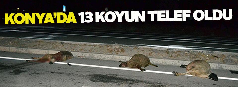Konya'da otomobil koyun sürüsüne çarptı