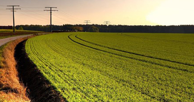 19 ürün tarım havzalarında desteklenecek