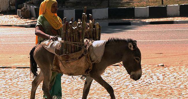 Dünyada en fazla eşek Etiyopya'da