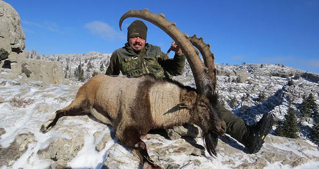 Boynuz uzunluğu 118 santimetre olan dağ keçisi avlandı