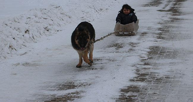 Konya'da köpekli kızak keyfi