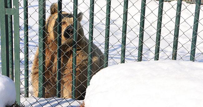 Hayvanlar soğuktan korunuyor