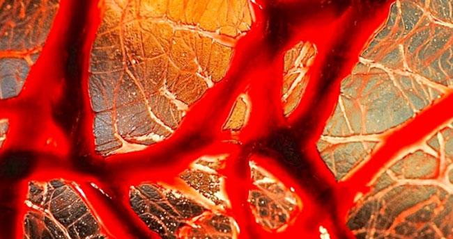 İnsan vücudunda yeni organ bulundu