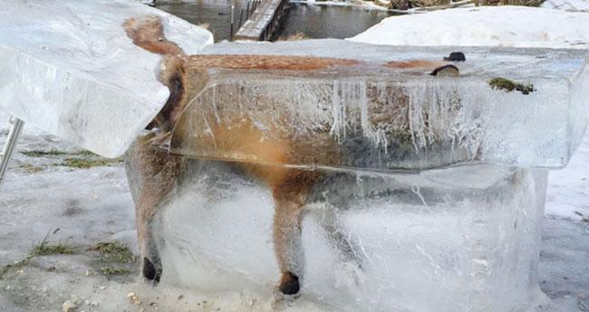 Avrupa'da aşırı soğuk tüm canlıları etkiledi