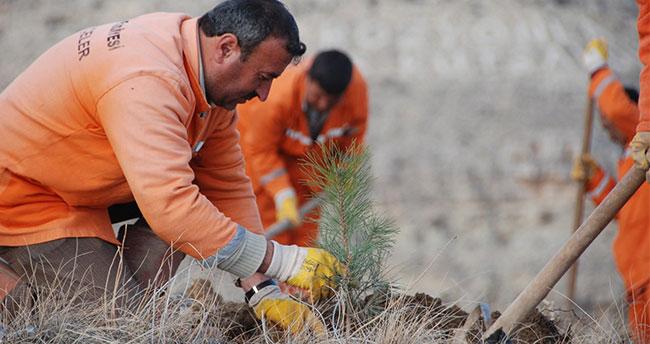 Konya'da 9,6 milyon fidan toprakla buluştu