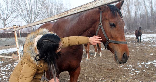 Türkiye'nin yarış atları Ereğli'de yetişiyor