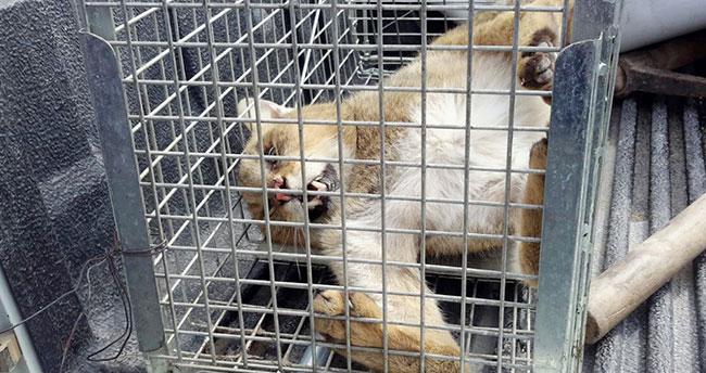 Konya'da yaban hayvanlarına acil müdahale hizmeti