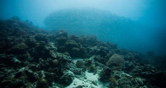 Dünyanın 8. kıtası sular altında gizleniyor
