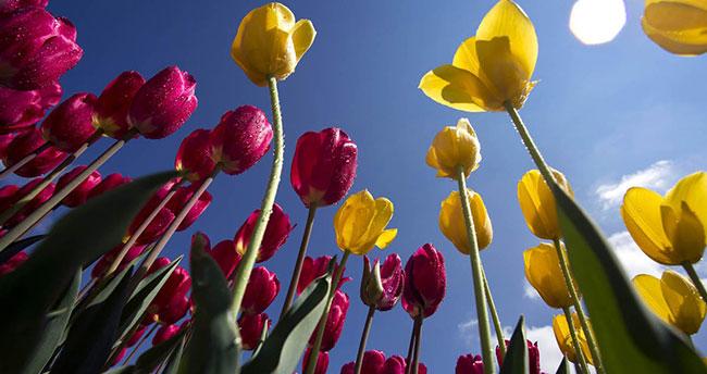 """Kelebekler Vadisinde """"Selçuklu Çiçek Bahçesi"""" açılıyor"""
