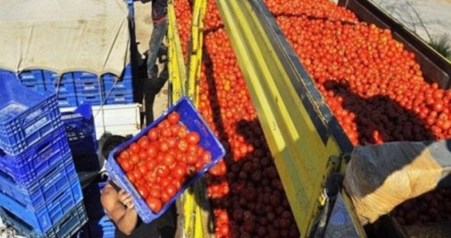 Flaş domates kararı: Ahmet yiyemiyorsa İvan'a da yok