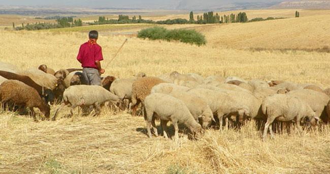 Konya'da çoban kendi tüfeği ile yaralandı