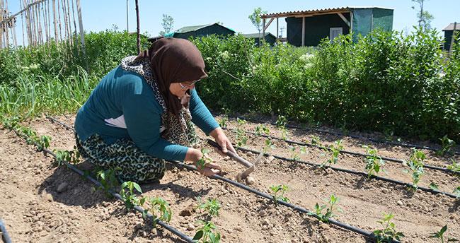 Hobi bahçeleri organik tarım alanına dönüştü