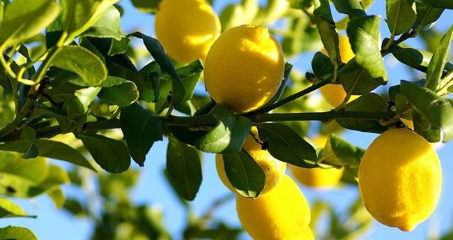 Konya'da zam şampiyonu Limon oldu