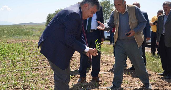 Ereğli'de dolu yağışı yüzde 80 zarar verdi