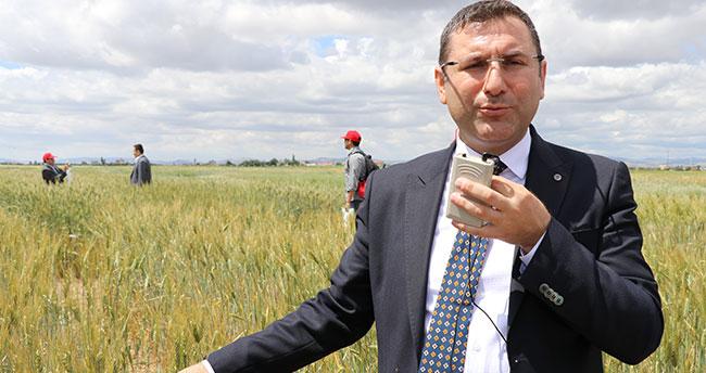 """Konya'da """"Yerel Buğday Tarla Günü"""" etkinliği"""