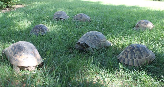 Kaplumbağalar bu parkı mesken tuttu