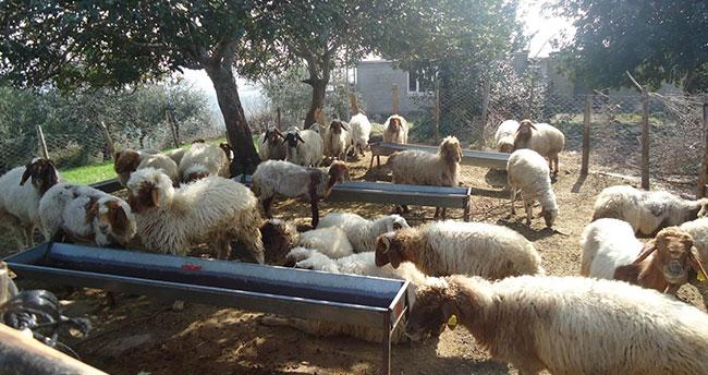 Orman köylüsü Konya'da ORKÖY ile kalkınıyor