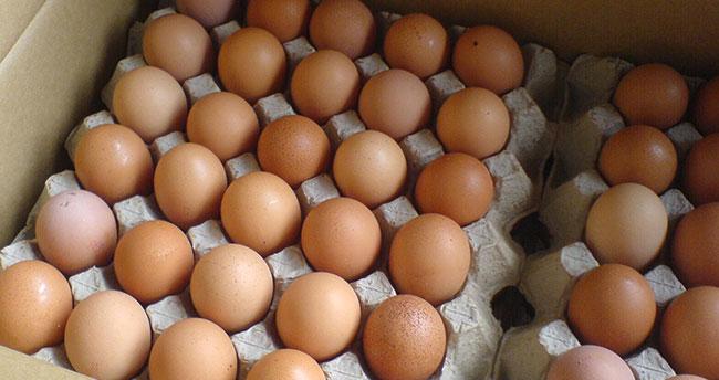 Yumurtada kuş gribi iddialarına yalanlama