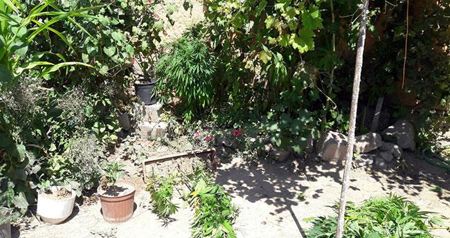 Konya'da evin bahçesinde 300 kök Hint keneviri bulundu