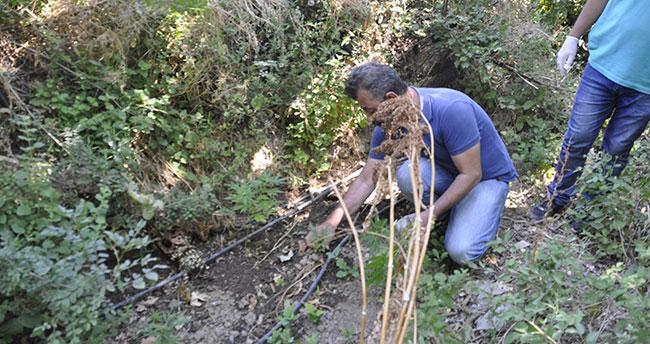 Araziye damlama sulama sistemi kurup Hint keneviri ekmiş