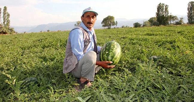 Seydişehir'de karpuz hasadı