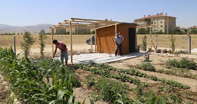 Hobi bahçelerinde hasat zamanı