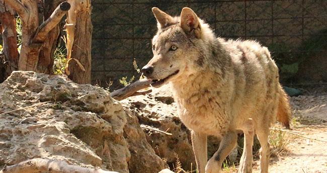 Karatay Belediyesi nesli tükenmekte olan hayvanları koruma altına alıyor