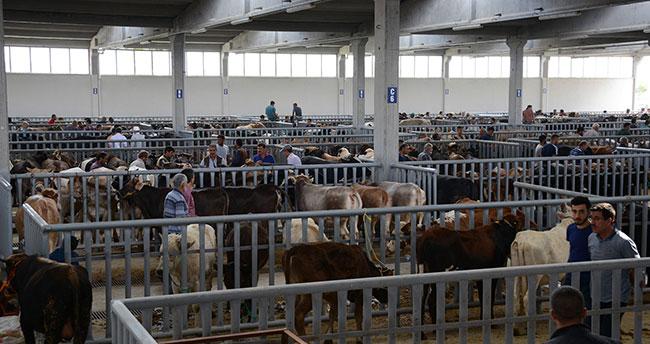 Türkiye'nin en modern hayvan pazarında bayram yoğunluğu