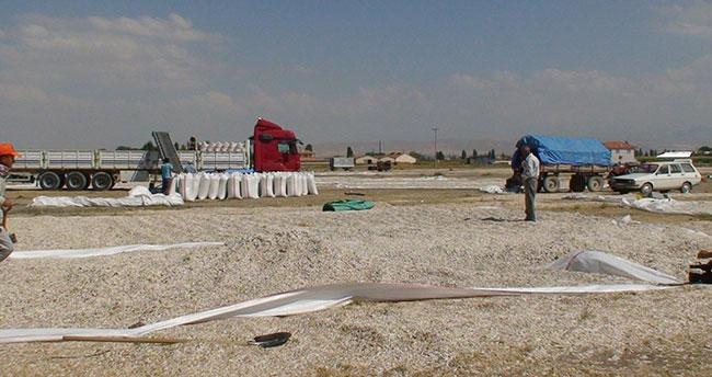 Konya'da ayçekirdeği hasadı başladı
