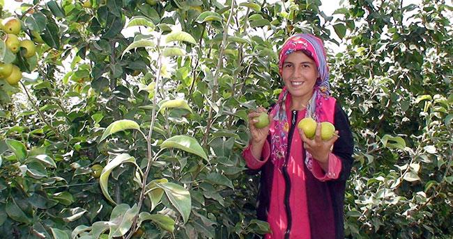 Konya'da çiftçinin yeni umudu 'Japon armudu'