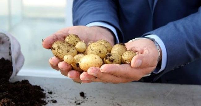 """""""Milli patates"""" geliyor"""