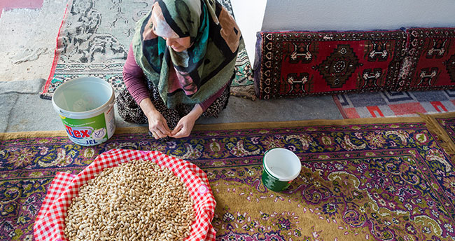Antep fıstığını Konya'da üretip Gaziantep'e satıyorlar