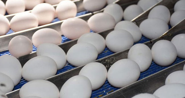 Köy yumurtası bitiyor, numaralı yumurtalar geliyor