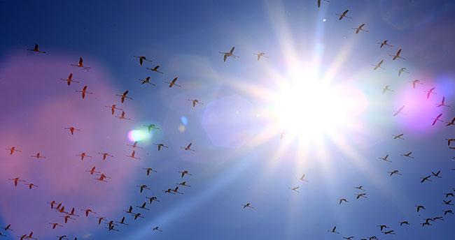 """Koruma altındaki """"kuş cenneti"""" misafirlerini ağırlıyor"""