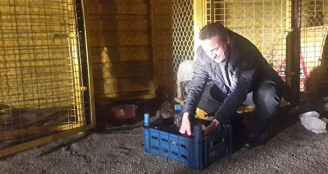 Başkan Tutal, yavru köpekleri sütle besledi