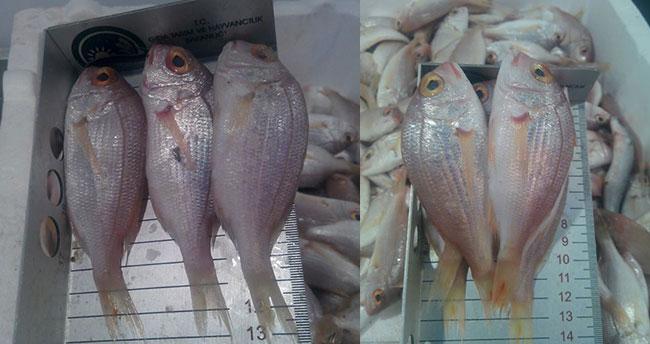Küçük boy mercan balığı satışına ceza
